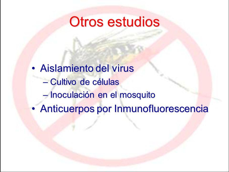 Otros estudios Aislamiento del virusAislamiento del virus –Cultivo de células –Inoculación en el mosquito Anticuerpos por InmunofluorescenciaAnticuerp