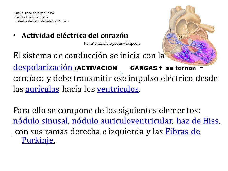 Universidad de la República Facultad de Enfermería Cátedra de Salud del Adulto y Anciano Actividad eléctrica del corazón El sistema de conducción se i