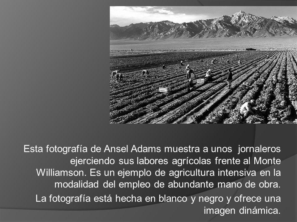 Esta fotografía de Ansel Adams muestra a unos jornaleros ejerciendo sus labores agrícolas frente al Monte Williamson. Es un ejemplo de agricultura int