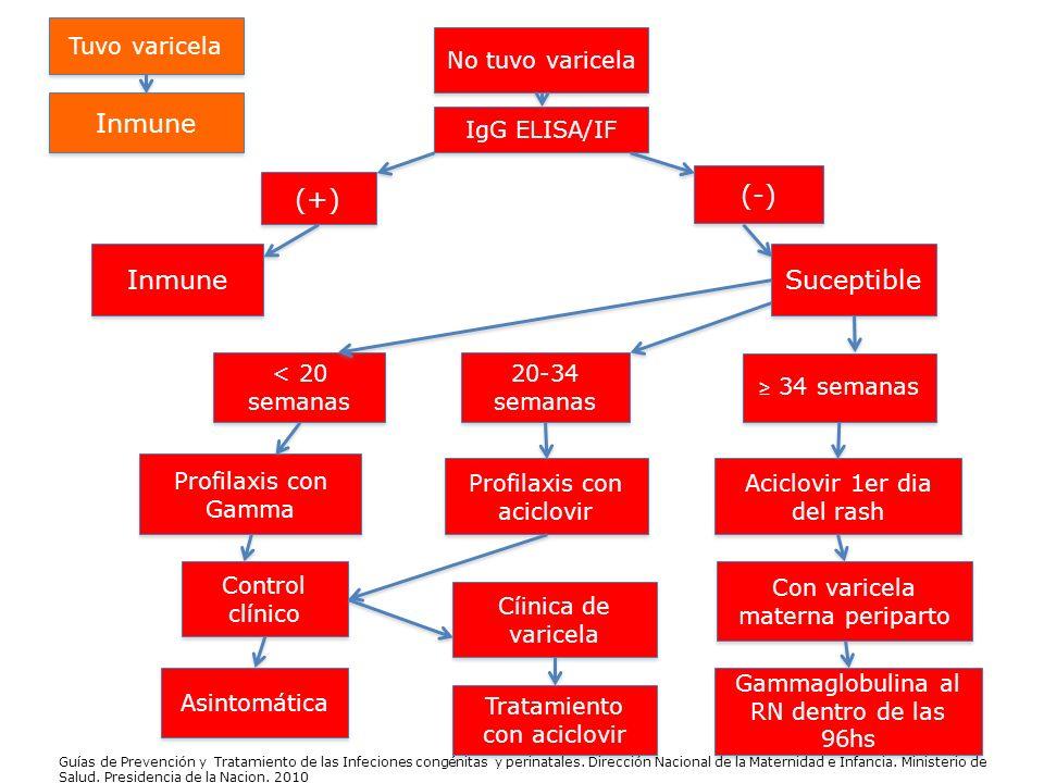 IgG ELISA/IF (+) (-) Inmune Suceptible < 20 semanas 20-34 semanas 20-34 semanas 34 semanas Profilaxis con Gamma Profilaxis con aciclovir Aciclovir 1er