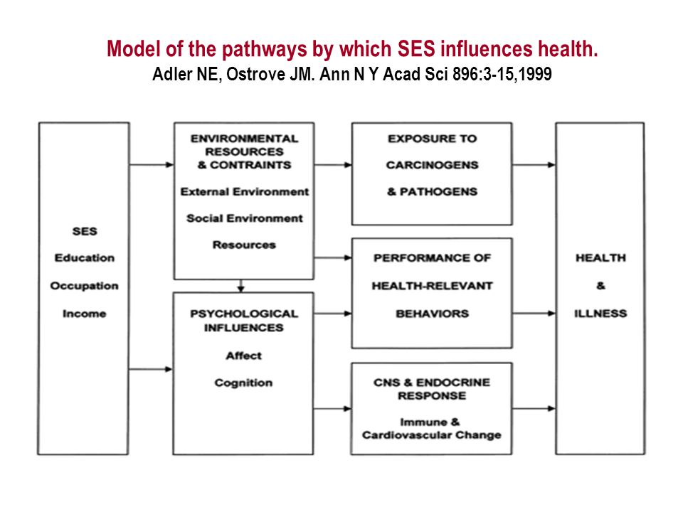 Model of the pathways by which SES influences health.