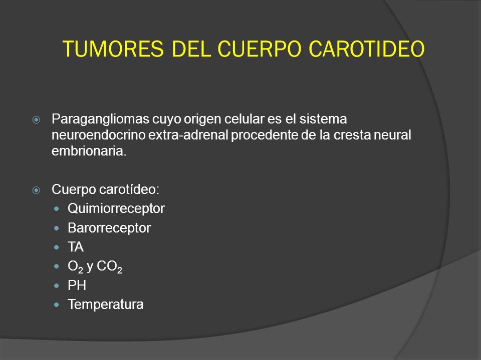 TUMORES DEL CUERPO CAROTIDEO Paragangliomas cuyo origen celular es el sistema neuroendocrino extra-adrenal procedente de la cresta neural embrionaria.