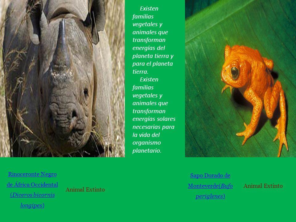 Rinoceronte Negro de África Occidental (Diceros bicornis longipes) Animal Extinto Sapo Dorado de Monteverde(Bufo periglenes) Animal Extinto Existen familias vegetales y animales que transforman energías del planeta tierra y para el planeta tierra.