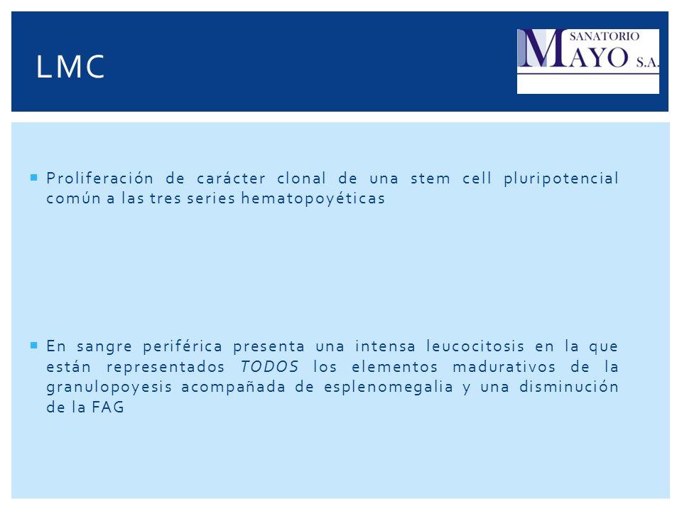 LMC Proliferación de carácter clonal de una stem cell pluripotencial común a las tres series hematopoyéticas En sangre periférica presenta una intensa