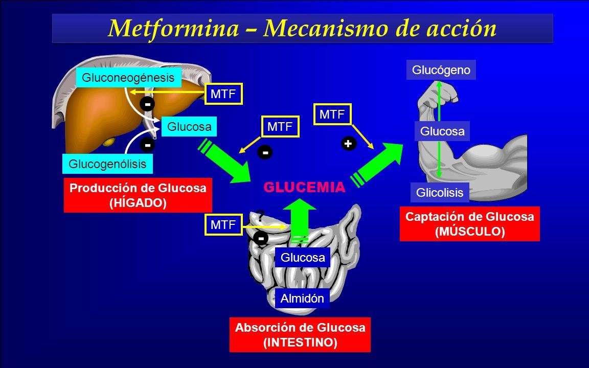 Metformina – Mecanismo de acción Metformina – Mecanismo de acción Producción de Glucosa (HÍGADO) Captación de Glucosa (MÚSCULO) Absorción de Glucosa (