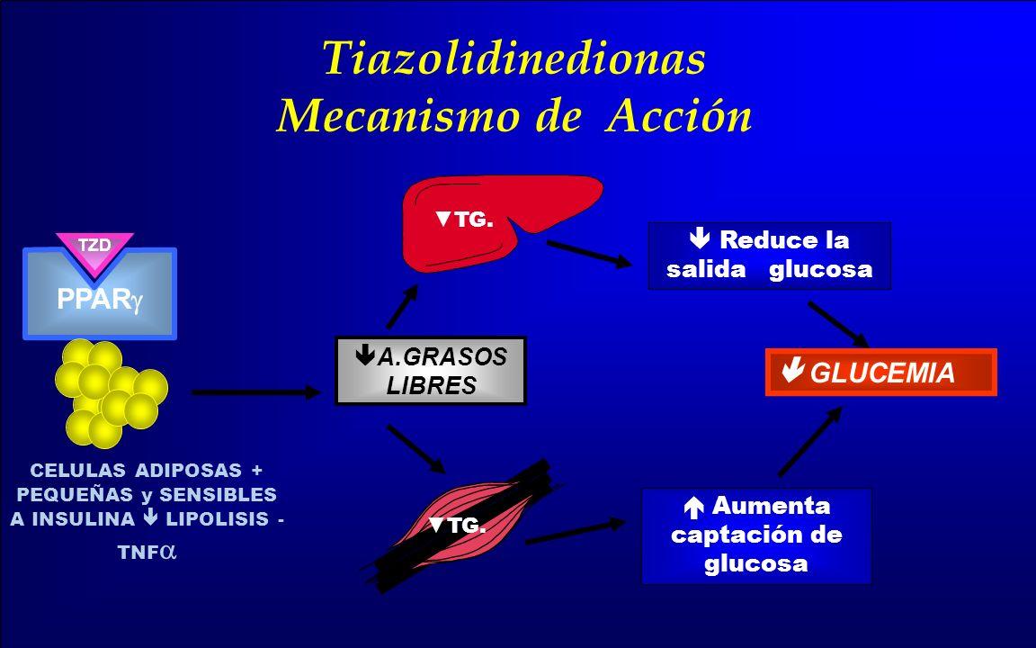 TZD GLUCEMIA Reduce la salida glucosa Aumenta captación de glucosa A.GRASOS LIBRES TG. Tiazolidinedionas Mecanismo de Acción PPAR CELULAS ADIPOSAS + P