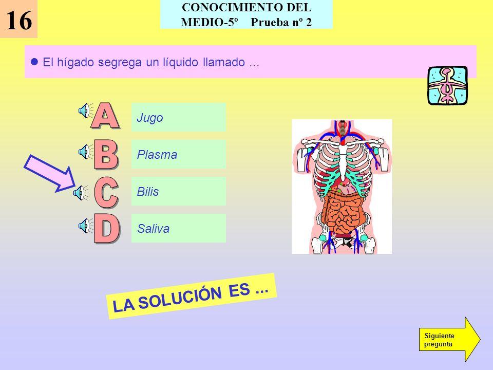 15 El órgano encargado de limpiar la sangre es... El riñón El estómago El hígado El páncreas LA SOLUCIÓN ES... Siguiente pregunta CONOCIMIENTO DEL MED