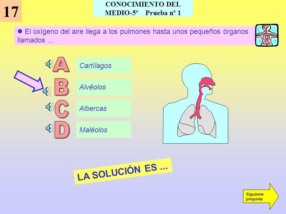 El hígado segrega un líquido llamado... 16 Jugo Plasma Bilis Saliva LA SOLUCIÓN ES... Siguiente pregunta CONOCIMIENTO DEL MEDIO-5º Prueba nº 2