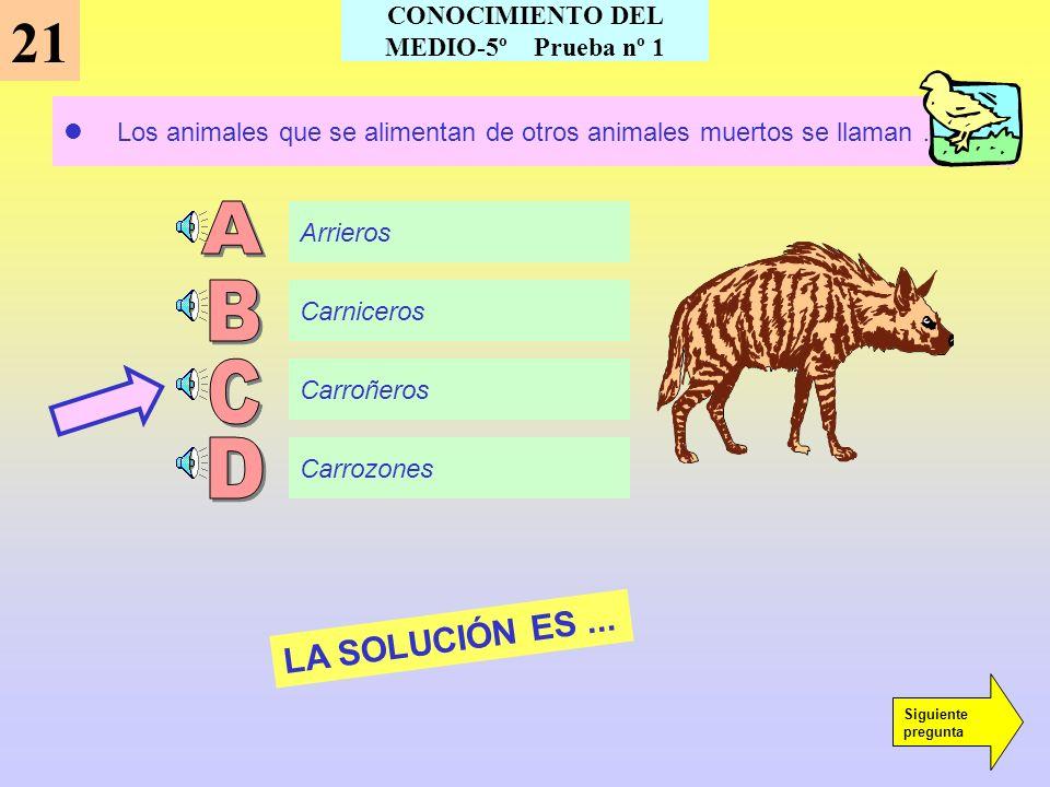 La Ley Fundamental del Estado Español es... 20 LA SOLUCIÓN ES... Siguiente pregunta CONOCIMIENTO DEL MEDIO-5º Prueba nº 1 La ley de seguros La Biblia