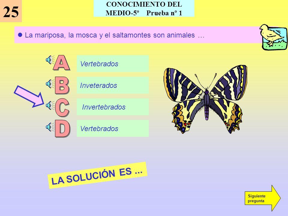 Este animal es un... 24 Insecto Ave Reptil Mamífero LA SOLUCIÓN ES... Siguiente pregunta CONOCIMIENTO DEL MEDIO-5º Prueba nº 1