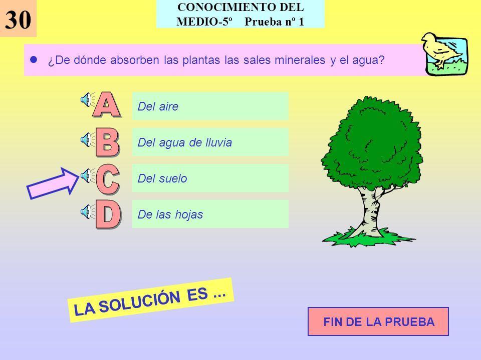 La expresión: Made in Spain, significa... LA SOLUCIÓN ES... 29 Siguiente pregunta CONOCIMIENTO DEL MEDIO-5º Prueba nº 1 Moda de España Fabricado en Es