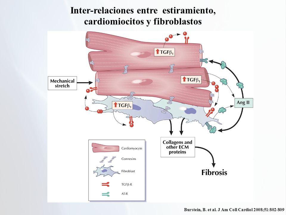 Burstein, B. et al. J Am Coll Cardiol 2008;51:802-809 Inter-relaciones entre estiramiento, cardiomiocitos y fibroblastos