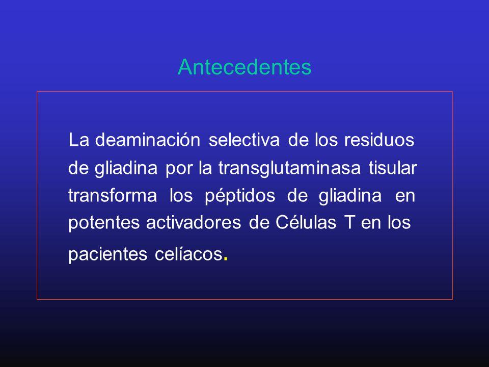 Antecedentes La deaminación selectiva de los residuos de gliadina por la transglutaminasa tisular transforma los péptidos de gliadina en potentes acti