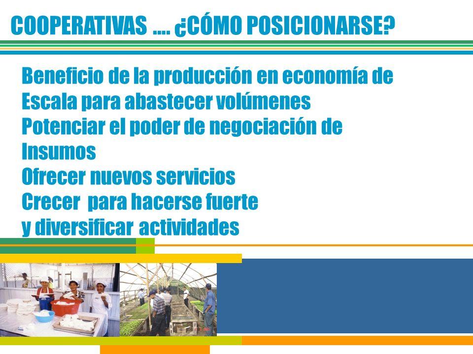 COOPERATIVAS …. ¿CÓMO POSICIONARSE? Beneficio de la producción en economía de Escala para abastecer volúmenes Potenciar el poder de negociación de Ins