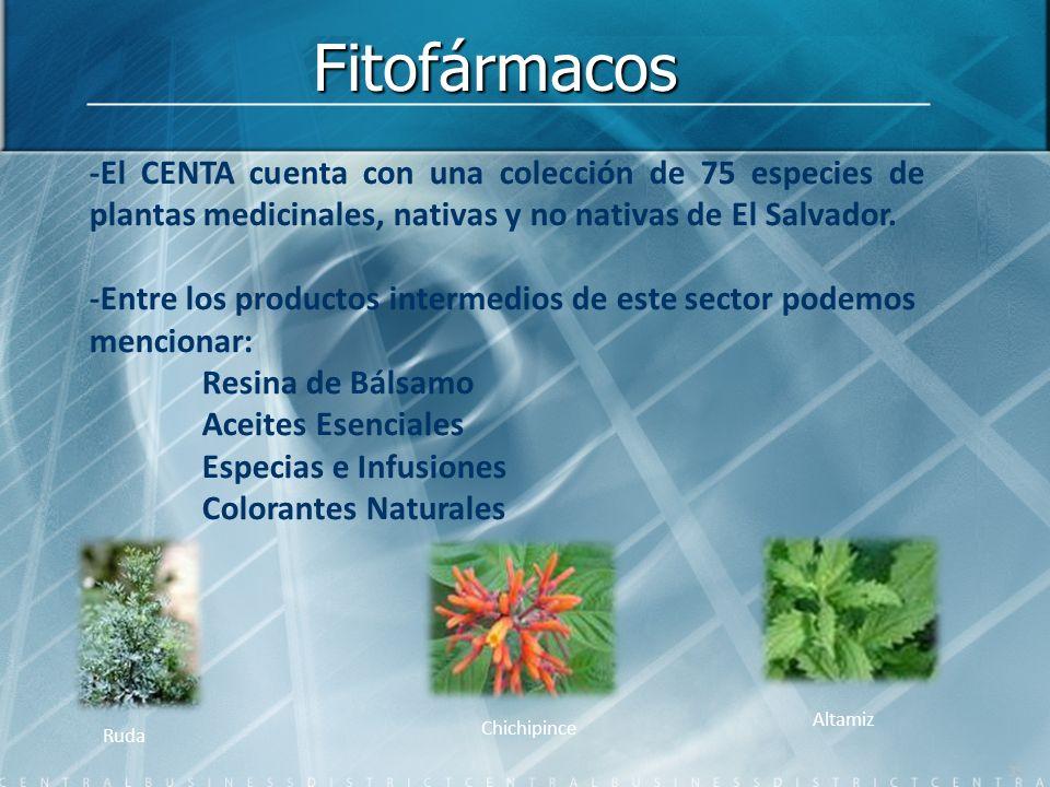 -El CENTA cuenta con una colección de 75 especies de plantas medicinales, nativas y no nativas de El Salvador. -Entre los productos intermedios de est