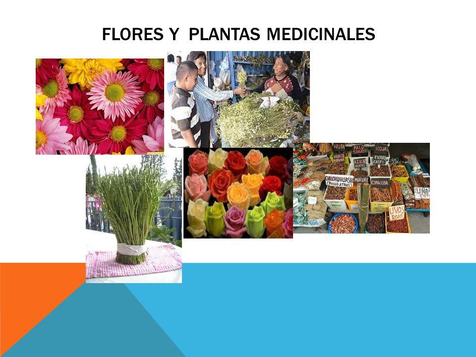 FLORES Y PLANTAS MEDICINALES