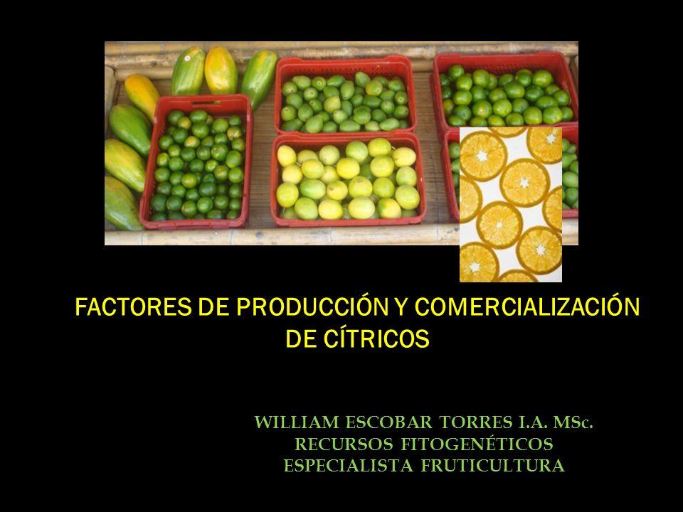 FACTORES DE PRODUCCIÓN Y COMERCIALIZACIÓN DE CÍTRICOS WILLIAM ESCOBAR TORRES I.A. MSc. RECURSOS FITOGENÉTICOS ESPECIALISTA FRUTICULTURA