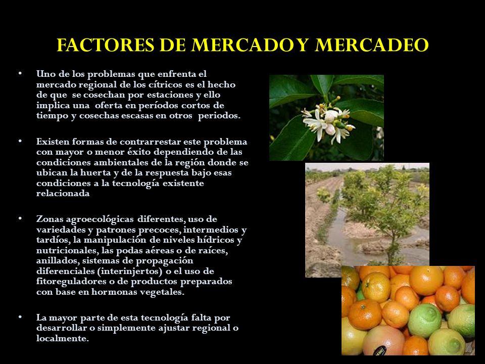 FACTORES DE MERCADO Y MERCADEO Uno de los problemas que enfrenta el mercado regional de los cítricos es el hecho de que se cosechan por estaciones y e
