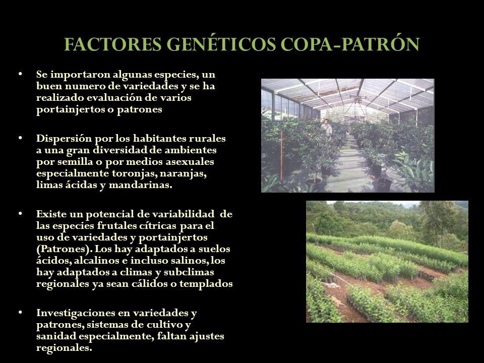 FACTORES GENÉTICOS COPA-PATRÓN Se importaron algunas especies, un buen numero de variedades y se ha realizado evaluación de varios portainjertos o pat