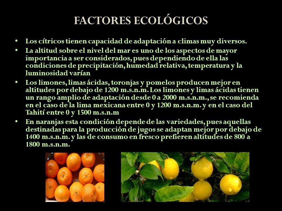 FACTORES ECOLÓGICOS Los cítricos tienen capacidad de adaptación a climas muy diversos. La altitud sobre el nivel del mar es uno de los aspectos de may