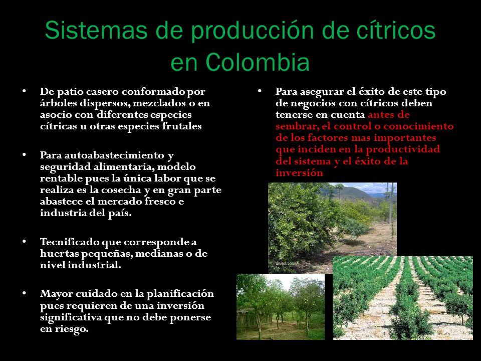 Sistemas de producción de cítricos en Colombia De patio casero conformado por árboles dispersos, mezclados o en asocio con diferentes especies cítrica