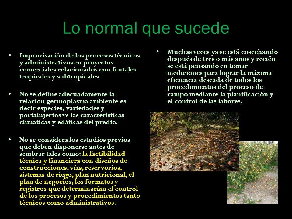 Lo normal que sucede Improvisación de los procesos técnicos y administrativos en proyectos comerciales relacionados con frutales tropicales y subtropi
