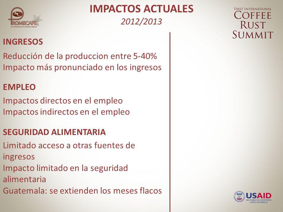 INGRESOS EMPLEO SEGURIDAD ALIMENTARIA Impactos directos en el empleo Impactos indirectos en el empleo Reducción de la produccion entre 5-40% Impacto más pronunciado en los ingresos Limitado acceso a otras fuentes de ingresos Impacto limitado en la seguridad alimentaria Guatemala: se extienden los meses flacos IMPACTOS ACTUALES 2012/2013