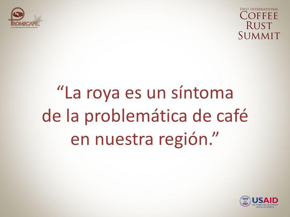 La roya es un síntoma de la problemática de café en nuestra región.