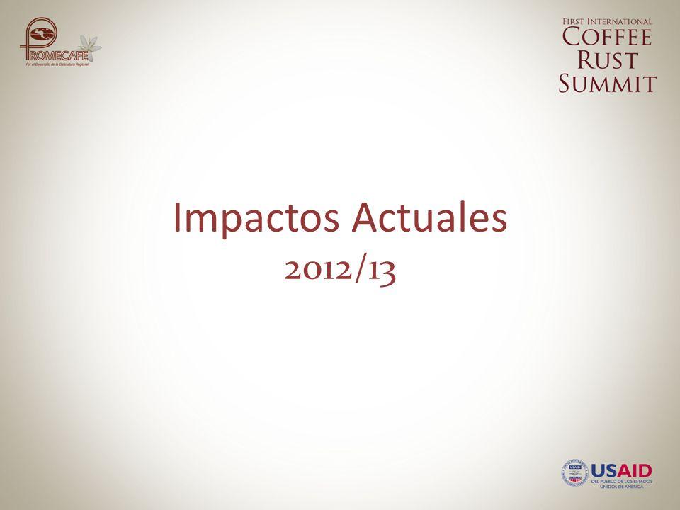 IMPACTOS ACTUALES 2012/2013 INGRESOS EMPLEO SEGURIDAD ALIMENTARIA