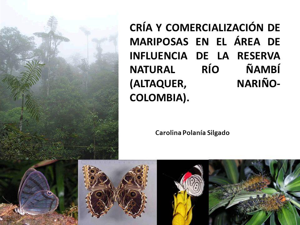 CRÍA Y COMERCIALIZACIÓN DE MARIPOSAS EN EL ÁREA DE INFLUENCIA DE LA RESERVA NATURAL RÍO ÑAMBÍ (ALTAQUER, NARIÑO- COLOMBIA). Carolina Polanía Silgado