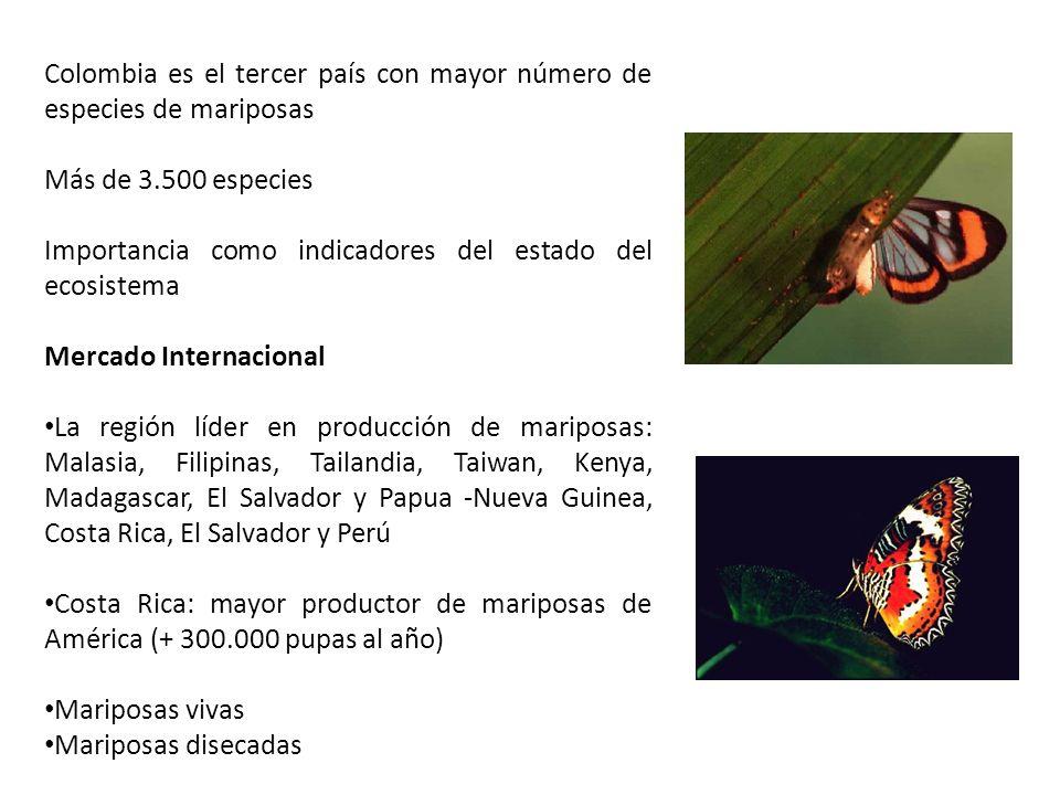 Colombia es el tercer país con mayor número de especies de mariposas Más de 3.500 especies Importancia como indicadores del estado del ecosistema Merc