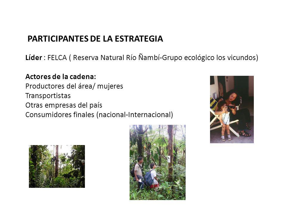 PARTICIPANTES DE LA ESTRATEGIA Líder : FELCA ( Reserva Natural Río Ñambí-Grupo ecológico los vicundos) Actores de la cadena: Productores del área/ muj