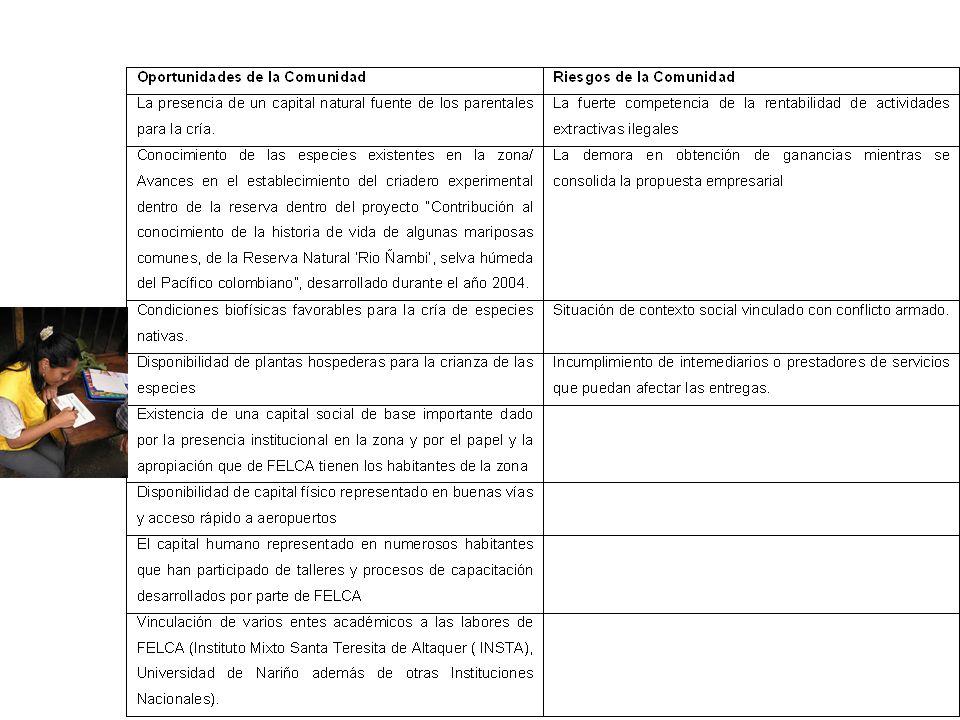 Definición de mercado objetivo Mariposas vivas mediante la estrategia de cría exsitu: turismo ecológico y comercialización de las especies en los mercado nacional e internacional con las siguientes especies: Morphos (2 sp), Heliconius (2 sp) ESTRATEGIA DE INTERVENCIÓN