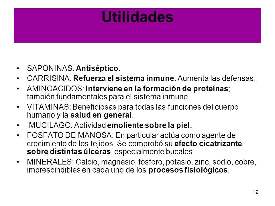 19 Utilidades SAPONINAS: Antiséptico. CARRISINA: Refuerza el sistema inmune. Aumenta las defensas. AMINOACIDOS: Interviene en la formación de proteína