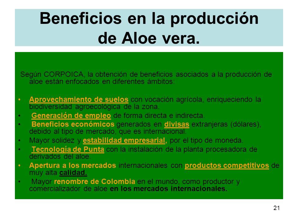 21 Beneficios en la producción de Aloe vera. Según CORPOICA, la obtención de beneficios asociados a la producción de aloe están enfocados en diferente