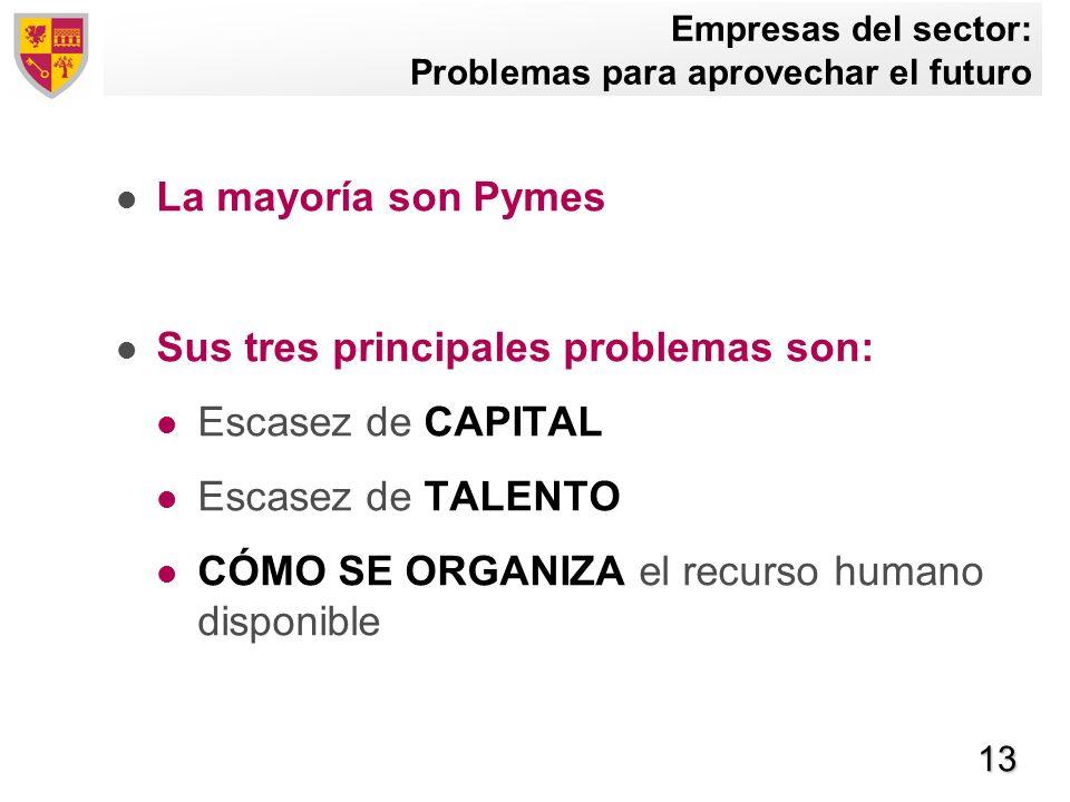 13 Empresas del sector: Problemas para aprovechar el futuro La mayoría son Pymes Sus tres principales problemas son: Escasez de CAPITAL Escasez de TAL