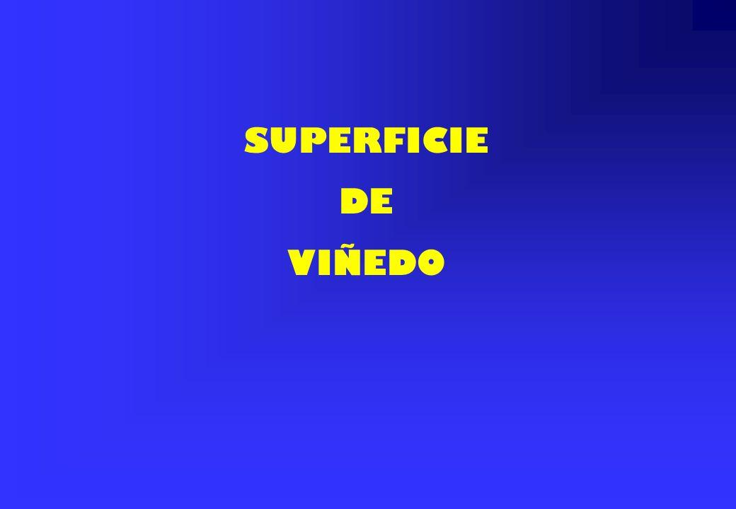 SUPERFICIE DE VIÑEDO