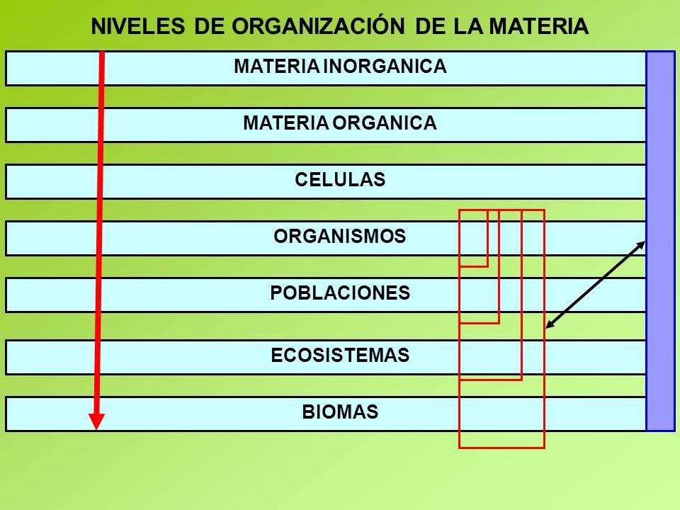 NIVELES DE ORGANIZACIÓN DE LA MATERIA MATERIA INORGANICA MATERIA ORGANICA CELULAS ORGANISMOS POBLACIONES ECOSISTEMAS BIOMAS