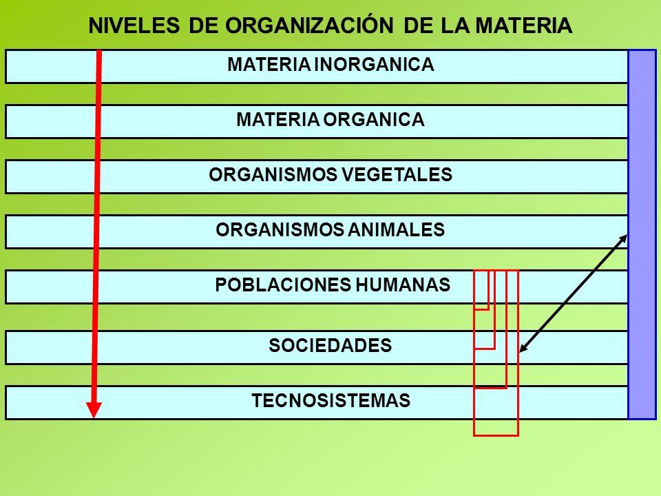 ESQUEMA - ECONOMÍA ECOLÓGICA ECOSISTEMAS / BIOMAS / NATURALEZA / PLANETA MATERIAS PRIMAS ENERGÍA SOLAR RESIDUOS ECONOMÍA NEOCLÁSICA ENERGÍA RESIDUAL CALOR DISIPADO
