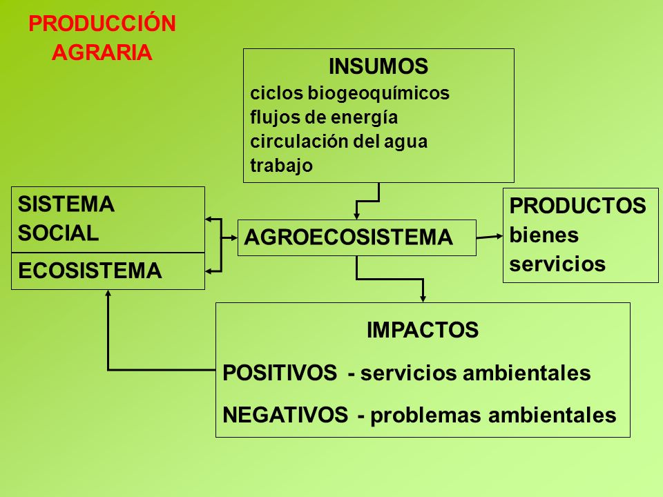 SISTEMA SOCIAL PRODUCTOS bienes servicios INSUMOS ciclos biogeoquímicos flujos de energía circulación del agua trabajo IMPACTOS POSITIVOS - servicios ambientales NEGATIVOS - problemas ambientales ECOSISTEMA AGROECOSISTEMA PRODUCCIÓN AGRARIA