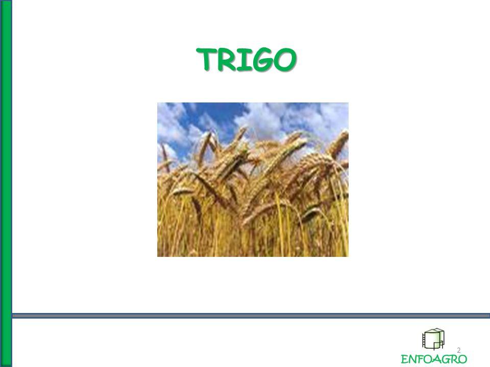 TRIGO 2
