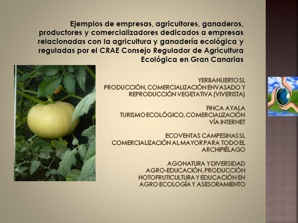 Ejemplos de empresas, agricultores, ganaderos, productores y comercializadores dedicados a empresas relacionadas con la agricultura y ganadería ecológica y reguladas por el CRAE Consejo Regulador de Agricultura Ecológica en Gran Canarias