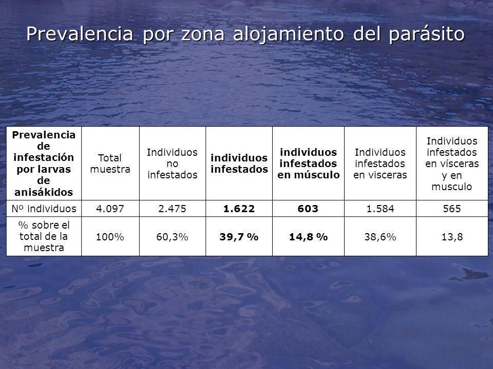 Prevalencia por zona alojamiento del parásito Prevalencia de infestación por larvas de anisákidos Total muestra Individuos no infestados individuos infestados individuos infestados en músculo Individuos infestados en visceras Individuos infestados en vísceras y en musculo Nº individuos4.0972.4751.6226031.584565 % sobre el total de la muestra 100%60,3%39,7 %14,8 %38,6%13,8