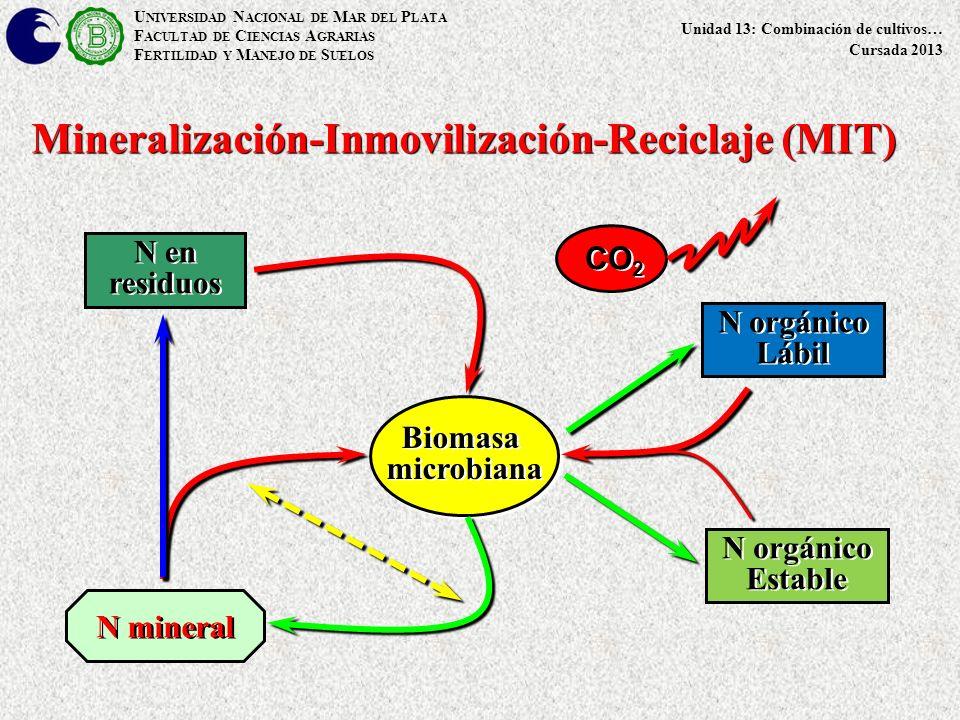 U NIVERSIDAD N ACIONAL DE M AR DEL P LATA F ACULTAD DE C IENCIAS A GRARIAS F ERTILIDAD Y M ANEJO DE S UELOS Unidad 13: Combinación de cultivos… Cursada 2013 Mineralización-Inmovilización-Reciclaje (MIT) BiomasamicrobianaBiomasamicrobiana N orgánico Lábil Estable N en residuos N mineral CO 2