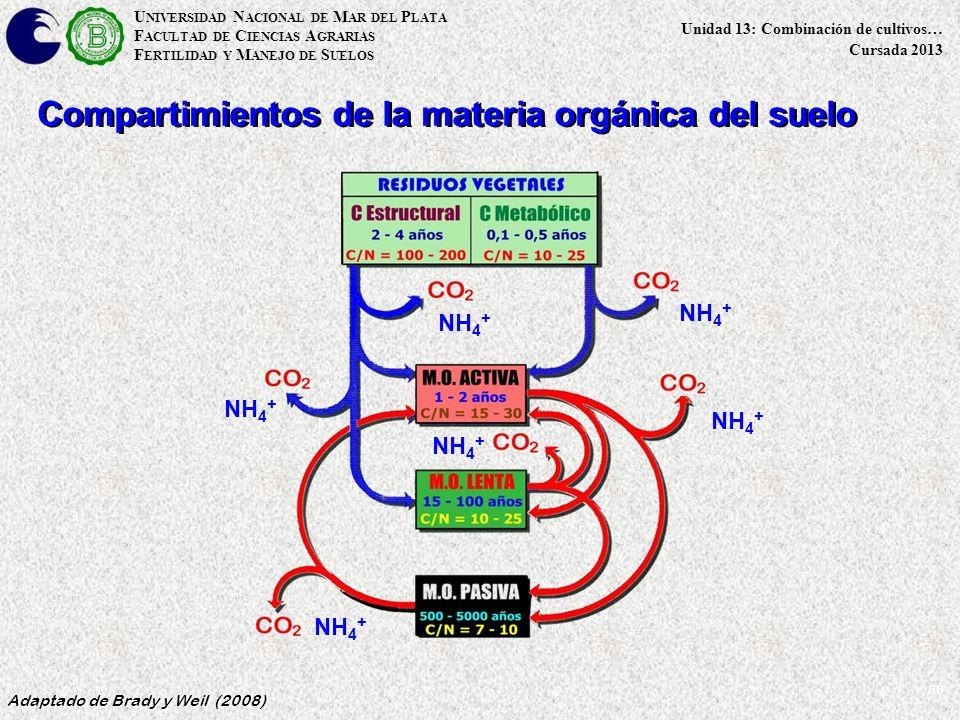 50 Adaptado de Brady y Weil (2008) U NIVERSIDAD N ACIONAL DE M AR DEL P LATA F ACULTAD DE C IENCIAS A GRARIAS F ERTILIDAD Y M ANEJO DE S UELOS Unidad 13: Combinación de cultivos… Cursada 2013 Compartimientos de la materia orgánica del suelo NH 4 +