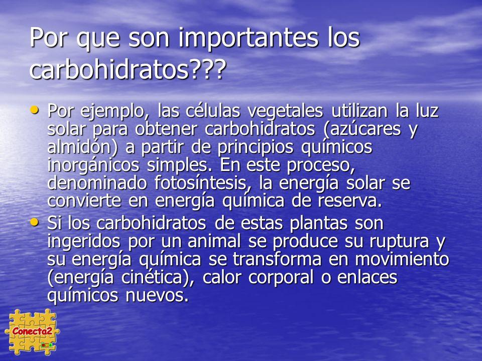 Por que son importantes los carbohidratos??.