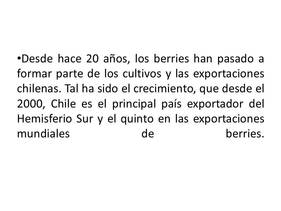 Desde hace 20 años, los berries han pasado a formar parte de los cultivos y las exportaciones chilenas. Tal ha sido el crecimiento, que desde el 2000,