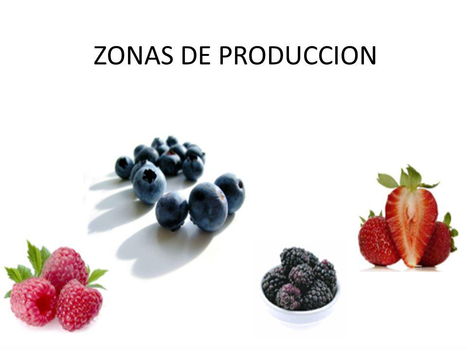 ZONAS DE PRODUCCION
