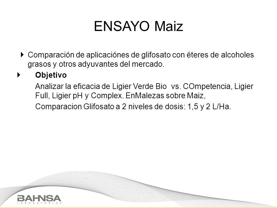 ENSAYO Maiz Comparación de aplicaciónes de glifosato con éteres de alcoholes grasos y otros adyuvantes del mercado. Objetivo Analizar la eficacia de L