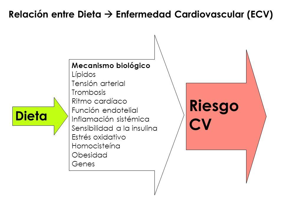 Relación entre Dieta Enfermedad Cardiovascular (ECV) Dieta Riesgo CV Mecanismo biológico Lípidos Tensión arterial Trombosis Ritmo cardíaco Función end